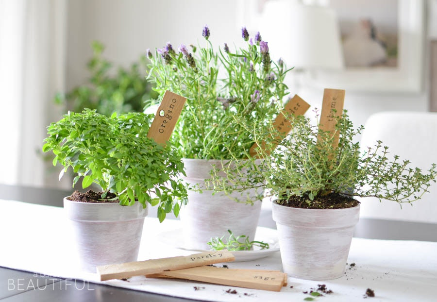 3 Ways to Freeze Fresh Herbs