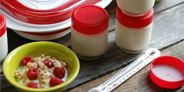 How to Make Homemade Yogurt (and Why Healthy Bacteria Is a Good Thing)