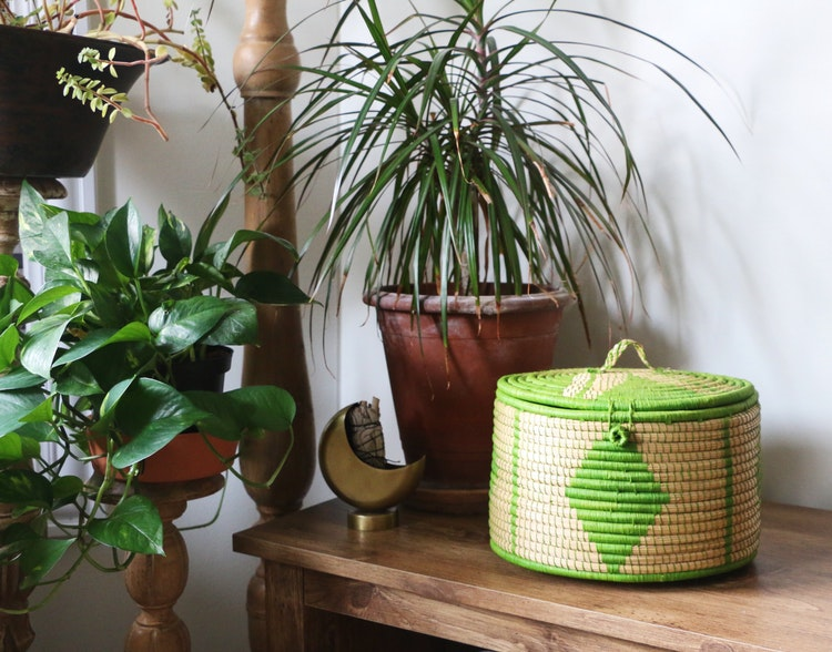 The Power of Adding Greenery to Your Home