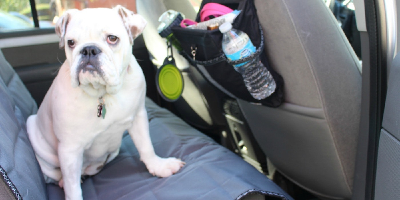 Traveling with Fido: Tips for Traveling with Your Pet