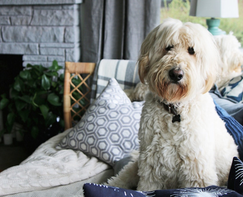 7 Products to Help You Keep Your House Clean, Even If You Have Pets