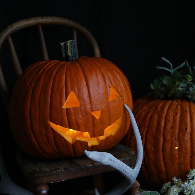Pumpkin Patch 18