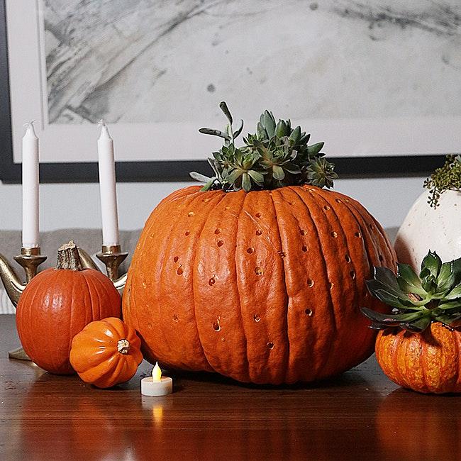 Pumpkin Patch 30