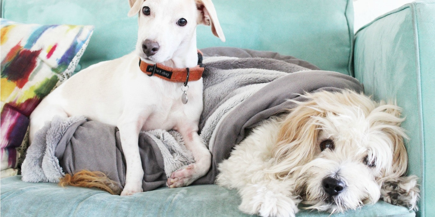 6 Feng Shui Essentials for Happy Pets