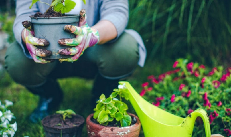 Yes, You CAN Grow Your Own Organic Garden