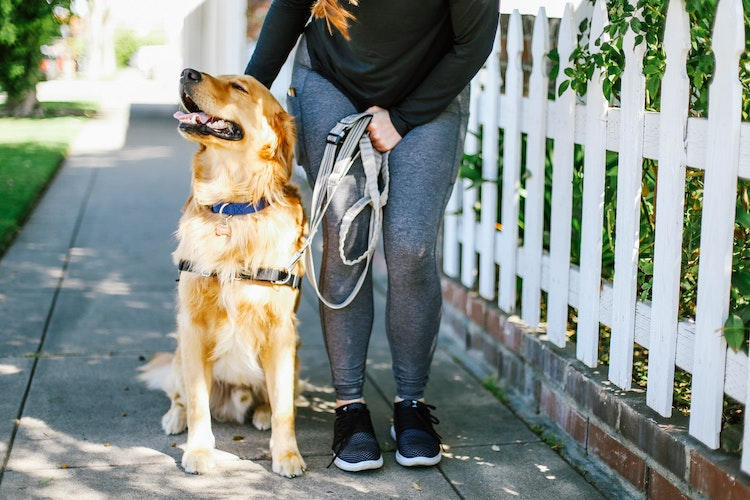 5 Dog Walking Tips for Your Furry Best Friend