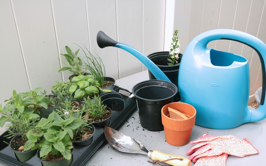 Getting Started with Small Space Herb Gardening